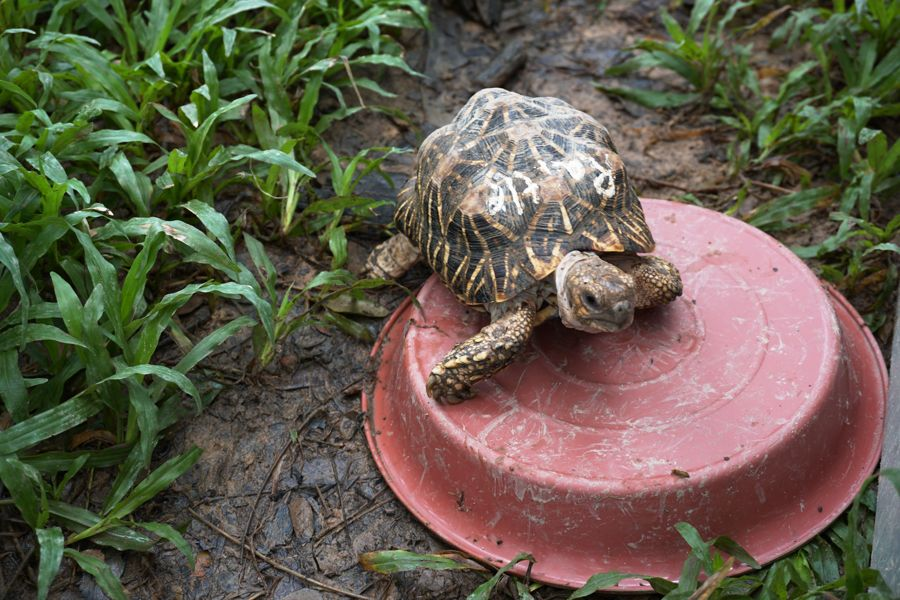 Rattle is one of the rescued tortoises